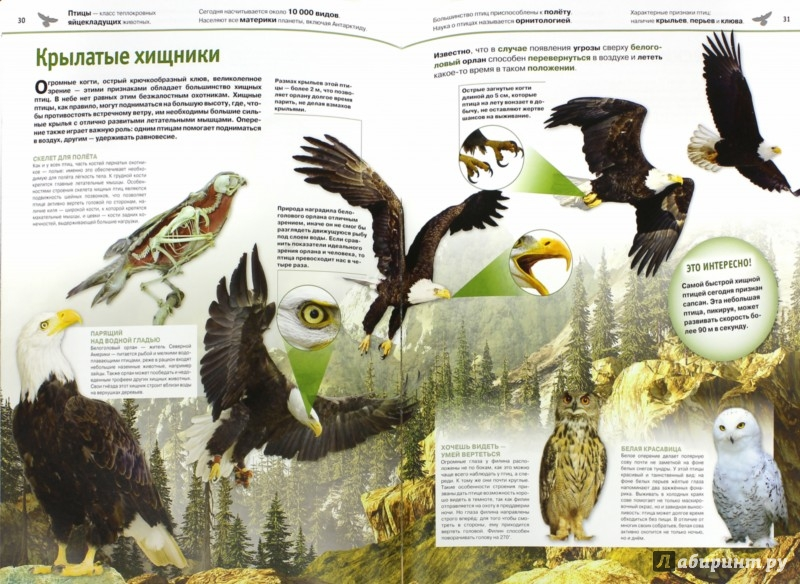 Иллюстрация 1 из 15 для Животные - Ивинская, Мазур | Лабиринт - книги. Источник: Лабиринт