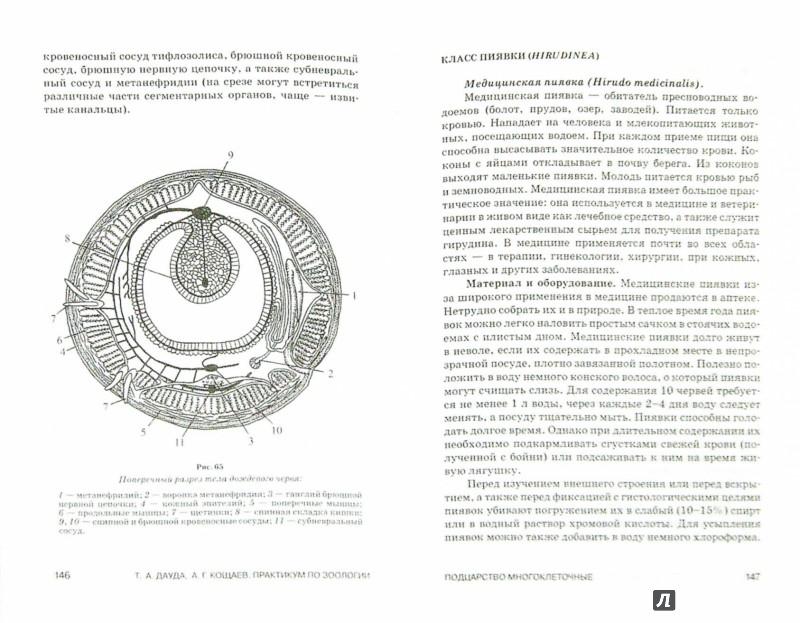 Иллюстрация 1 из 16 для Практикум по зоологии. Учебное пособие - Дауда, Кощаев   Лабиринт - книги. Источник: Лабиринт