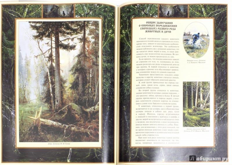 Иллюстрация 1 из 15 для Настольная книга охотника (в футляре) | Лабиринт - книги. Источник: Лабиринт