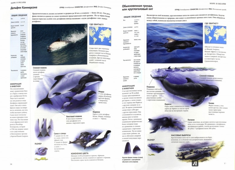 Иллюстрация 1 из 22 для Энциклопедия. Животный мир. Моря и океаны | Лабиринт - книги. Источник: Лабиринт
