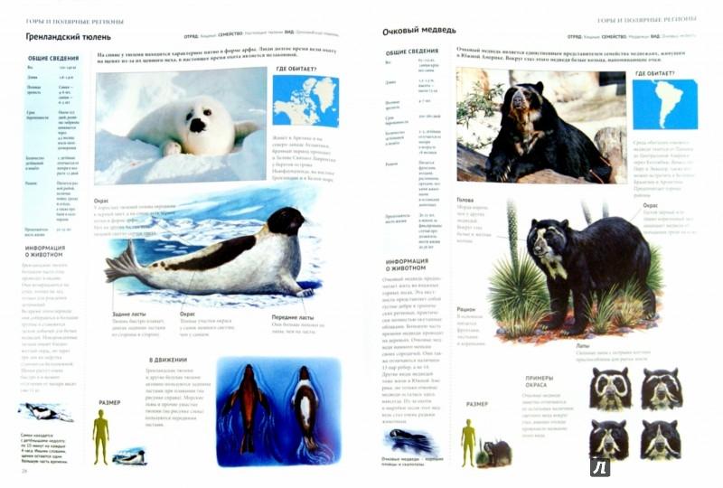 Иллюстрация 1 из 10 для Энциклопедия. Животный мир. Горы и полярные регионы   Лабиринт - книги. Источник: Лабиринт