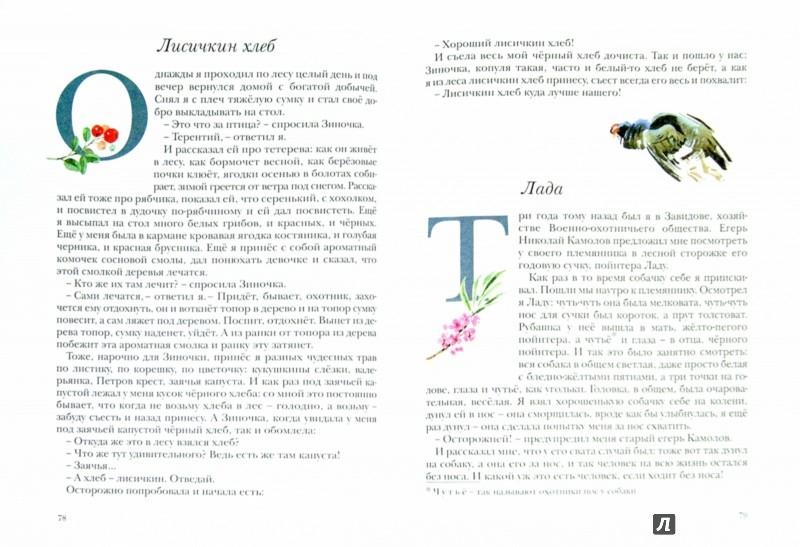 Иллюстрация 1 из 44 для Кладовая солнца - Михаил Пришвин | Лабиринт - книги. Источник: Лабиринт