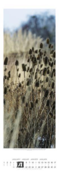 Иллюстрация 1 из 3 для Календарь 2015. САДЫ (34х98 см) (7701) - Von Luckner Ferdinand Graf | Лабиринт - сувениры. Источник: Лабиринт