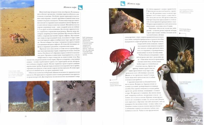 Иллюстрация 1 из 32 для Жители моря   Лабиринт - книги. Источник: Лабиринт
