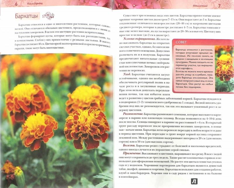 Иллюстрация 1 из 8 для Лучшие цветы для вашего сада - Ольга Городец | Лабиринт - книги. Источник: Лабиринт