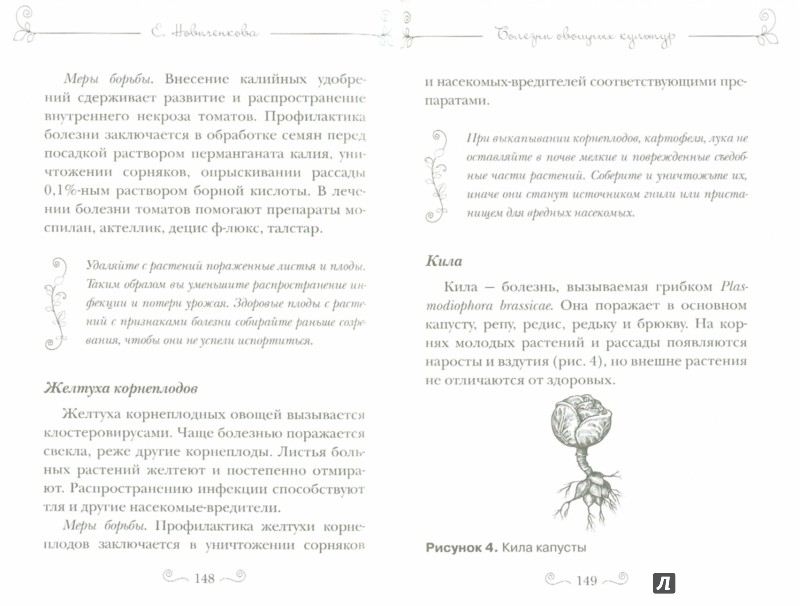 Иллюстрация 1 из 5 для Болезни и вредители овощей. Новейшие препараты для защиты - Елена Новиченкова | Лабиринт - книги. Источник: Лабиринт