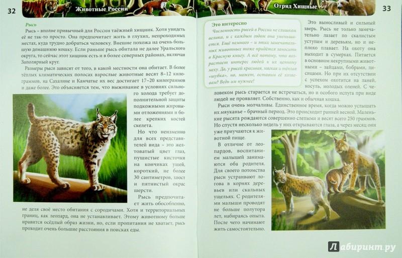 Иллюстрация 1 из 7 для Хочу знать. Животные России - Леся Калугина   Лабиринт - книги. Источник: Лабиринт
