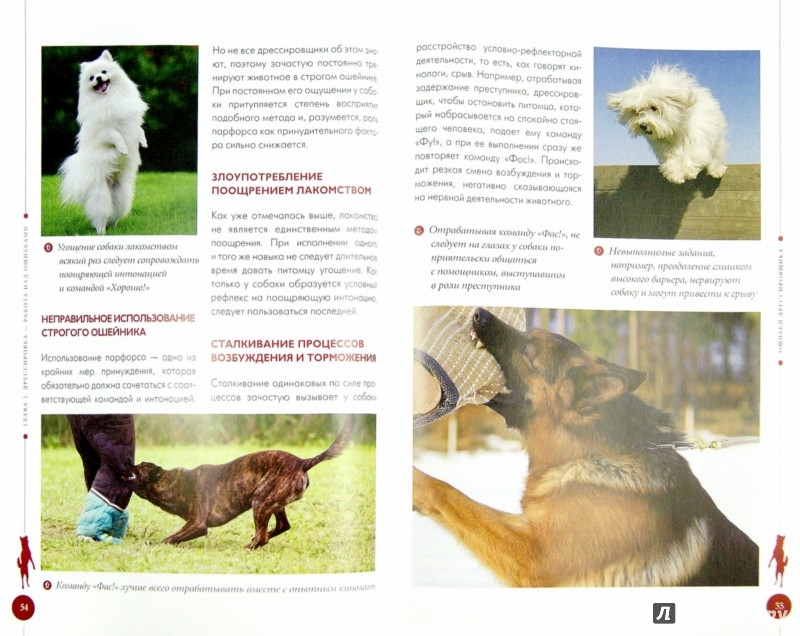 Иллюстрация 1 из 8 для Вредные привычки собак. Воспитание без стресса - Арсений Нестеров | Лабиринт - книги. Источник: Лабиринт