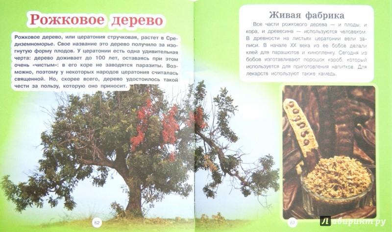 Иллюстрация 1 из 18 для Растения - Анна Спектор | Лабиринт - книги. Источник: Лабиринт