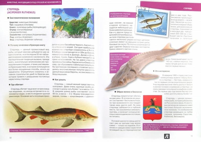 Иллюстрация 1 из 14 для Красная книга. Подводный мир России - Скалдина, Лукашанец | Лабиринт - книги. Источник: Лабиринт