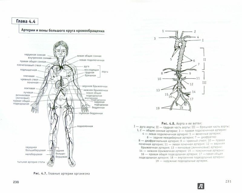 [0] => Анатомия в схемах и