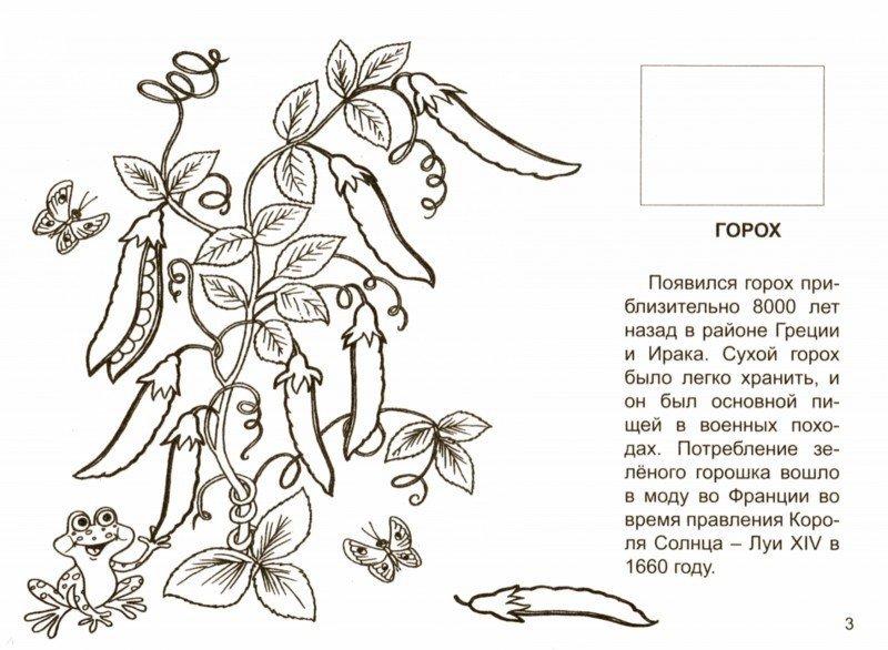 Иллюстрация 1 из 7 для Мир овощей и фруктов | Лабиринт - книги. Источник: Лабиринт
