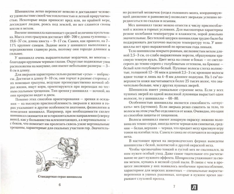 Иллюстрация 1 из 12 для Шиншилла от А до Я - Виктор Горбунов | Лабиринт - книги. Источник: Лабиринт