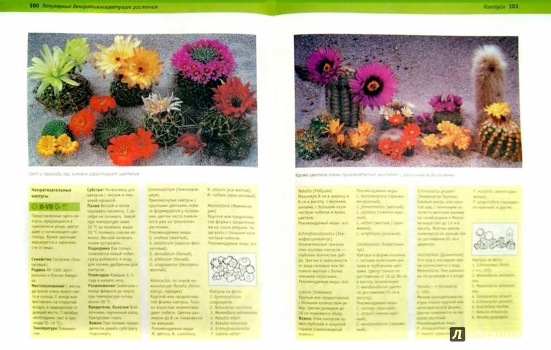 Иллюстрация 1 из 6 для Цветы в доме. Цветы в доме. Все о 200 самых популярных комнатных растениях - Рехт, Маркманн, Хайнц | Лабиринт - книги. Источник: Лабиринт