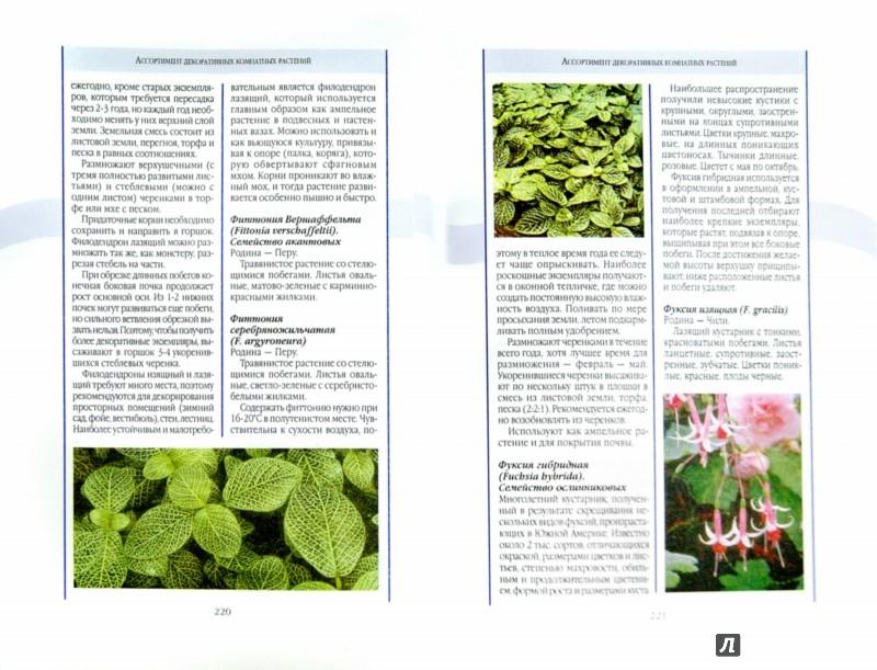 Иллюстрация 1 из 8 для Энциклопедия комнатных растений | Лабиринт - книги. Источник: Лабиринт
