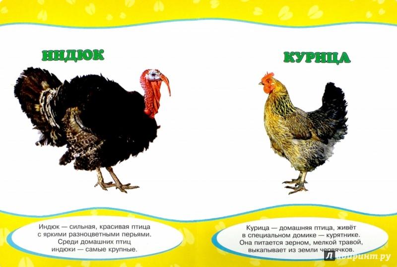 Иллюстрация 1 из 12 для Картонка. Обо всем на свете. Домашние животные   Лабиринт - книги. Источник: Лабиринт