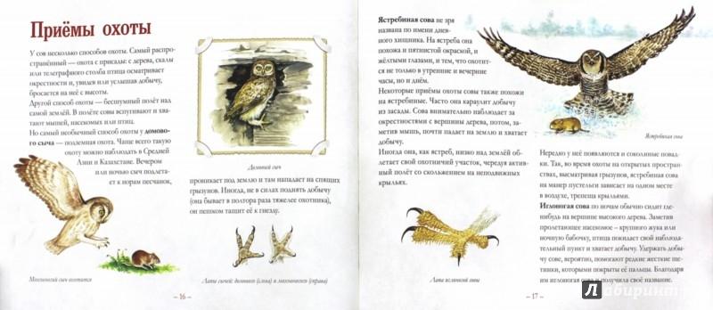 Иллюстрация 1 из 9 для Небольшая книга о совах - Владимир Бабенко | Лабиринт - книги. Источник: Лабиринт