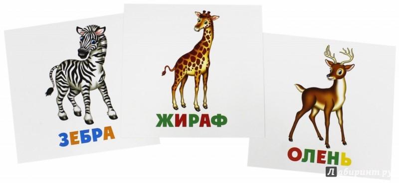 Иллюстрация 1 из 12 для Развивающие карточки Дикие животные (12шт) (37273-50)   Лабиринт - книги. Источник: Лабиринт