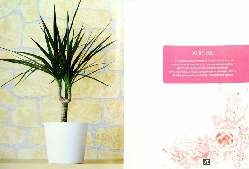 Иллюстрация 1 из 10 для Комнатные растения. Календарь по уходу на каждый месяц - Татьяна Смирнова | Лабиринт - книги. Источник: Лабиринт