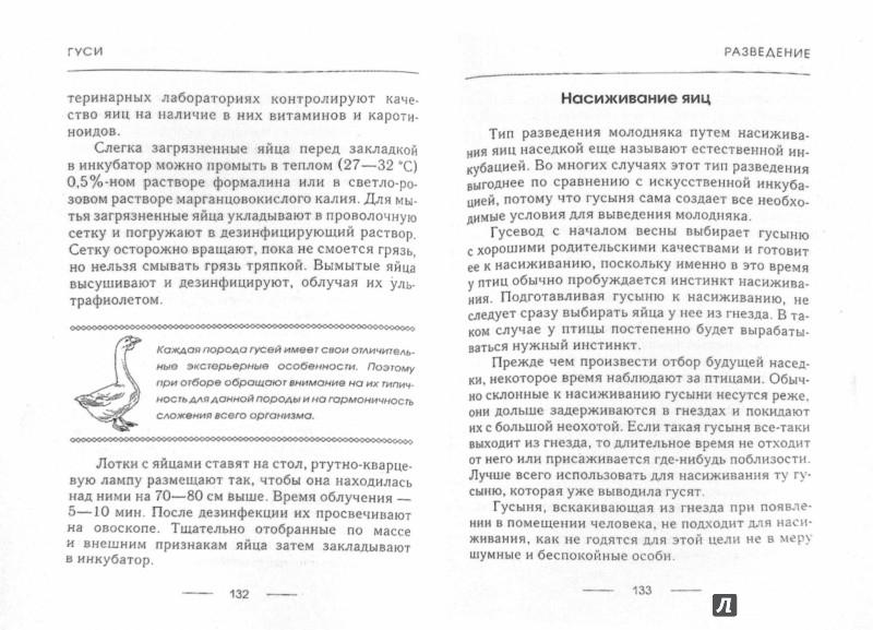 Иллюстрация 1 из 11 для Гуси и утки - Любовь Стрельникова | Лабиринт - книги. Источник: Лабиринт