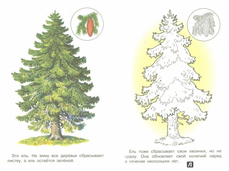 Иллюстрация 1 из 21 для Раскраска. Раскрашиваем и учимся. Деревья | Лабиринт - книги. Источник: Лабиринт