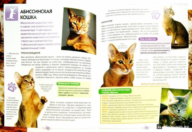 Иллюстрация 1 из 8 для Всё о кошках. Большая иллюстрированная энциклопедия   Лабиринт - книги. Источник: Лабиринт
