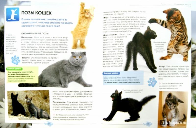 Иллюстрация 1 из 8 для Кошки. Полная иллюстрированная энциклопедия | Лабиринт - книги. Источник: Лабиринт