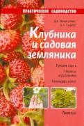 Никиточкин, Сырицо: Клубника и садовая земляника