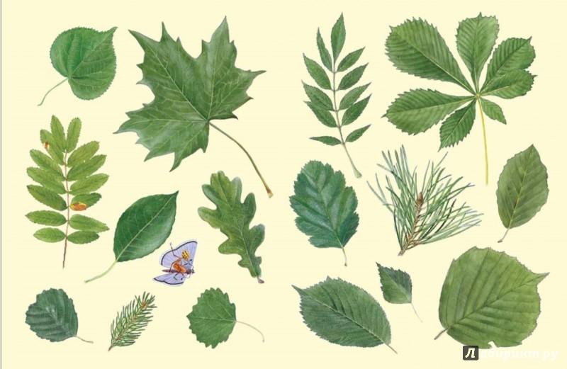 Иллюстрация 1 из 34 для Софи в мире деревьев - Стефан Каста | Лабиринт - книги. Источник: Лабиринт