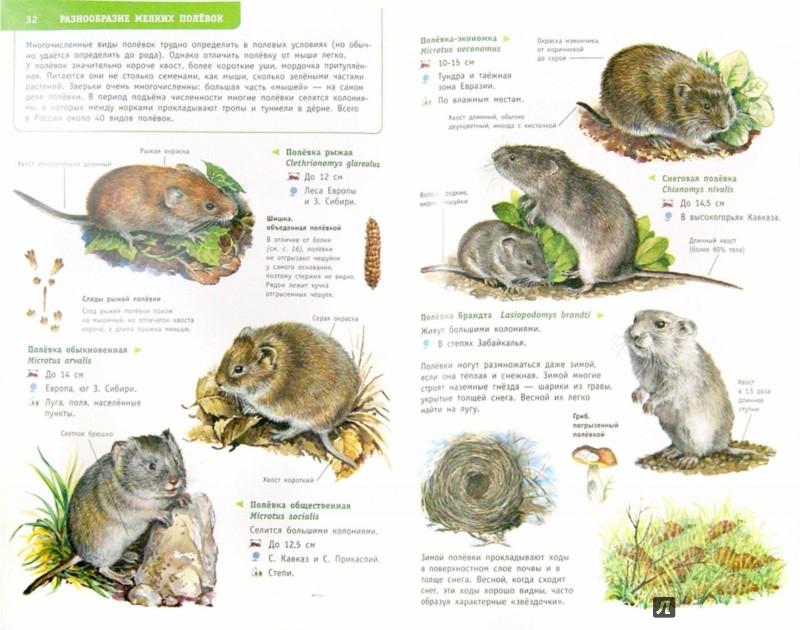 Иллюстрация 1 из 12 для Животные России. Определитель - Целлариус, Волцит | Лабиринт - книги. Источник: Лабиринт