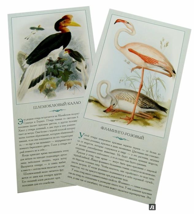 Иллюстрация 1 из 9 для Экзотические птицы. Необычные, причудливые, странные - Л. Жукова | Лабиринт - книги. Источник: Лабиринт