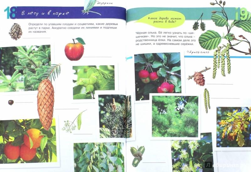 Иллюстрация 1 из 20 для Растения - Петр Волцит   Лабиринт - книги. Источник: Лабиринт
