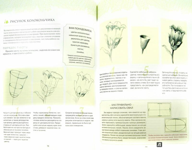 Иллюстрация 1 из 31 для Ботаническая иллюстрация - Венди Холендер | Лабиринт - книги. Источник: Лабиринт