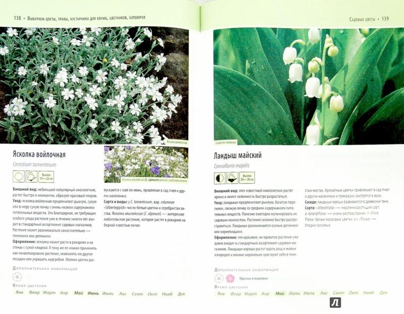 Иллюстрация 1 из 4 для Выбираем цветы, травы, кустарники для клумб, цветников, бордюров - Ангелика Тролль | Лабиринт - книги. Источник: Лабиринт