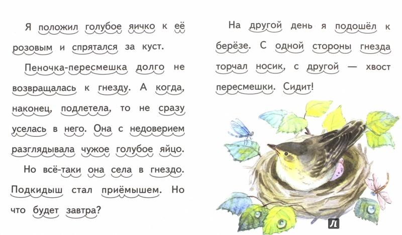 Иллюстрация 1 из 7 для Подкидыш - Виталий Бианки | Лабиринт - книги. Источник: Лабиринт
