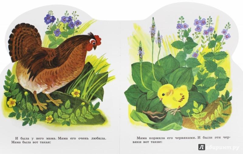 Иллюстрация 1 из 16 для Цыпленок - Корней Чуковский | Лабиринт - книги. Источник: Лабиринт