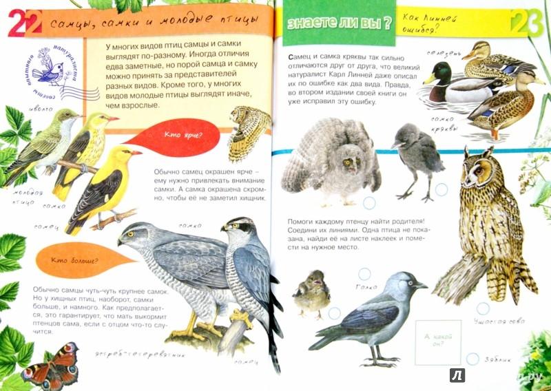 Иллюстрация 1 из 28 для Птицы - Петр Волцит | Лабиринт - книги. Источник: Лабиринт