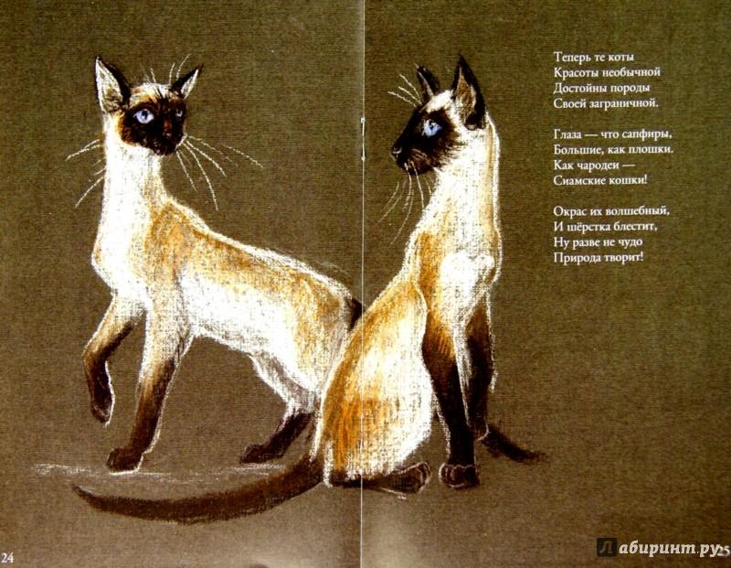 Иллюстрация 1 из 3 для Коты бывают разные - Светлана Белорукова | Лабиринт - книги. Источник: Лабиринт