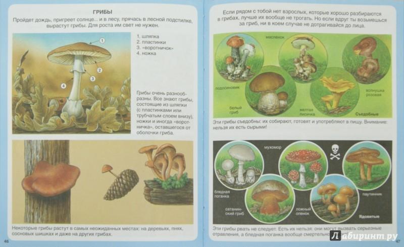 Иллюстрация 1 из 55 для Жизнь леса - Мари-Рене Пимон | Лабиринт - книги. Источник: Лабиринт
