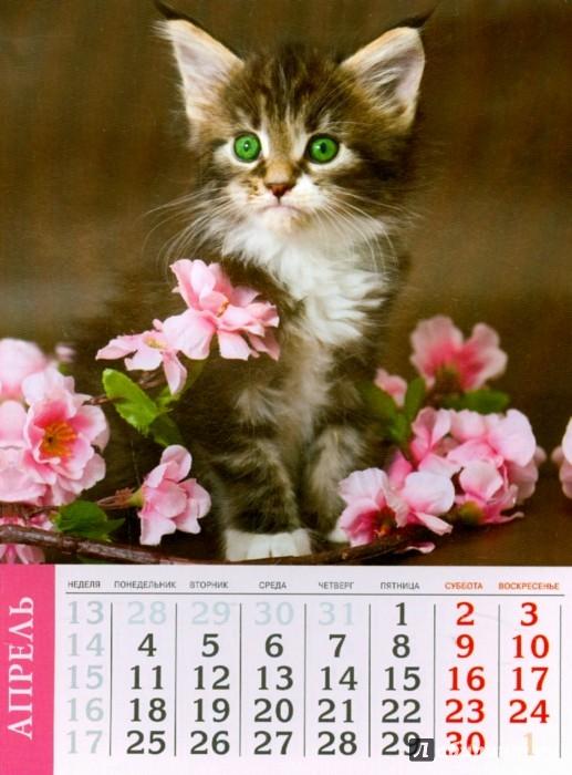 Иллюстрация 1 из 10 для Календарь на 2016 год. КОШКИ (на магните) (39589-36) | Лабиринт - сувениры. Источник: Лабиринт