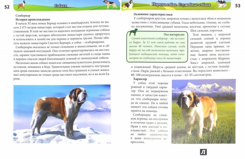 Иллюстрация 1 из 27 для Собаки - Леся Калугина | Лабиринт - книги. Источник: Лабиринт