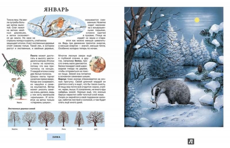 Иллюстрация 1 из 21 для Год в лесу - Сюзанна Риха | Лабиринт - книги. Источник: Лабиринт