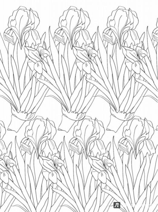 раскраски для взрослых блогер Kydr96ka на сайте Spletnik