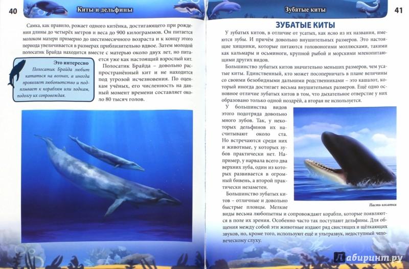 Иллюстрация 1 из 36 для Киты и дельфины - Михаил Савостин | Лабиринт - книги. Источник: Лабиринт