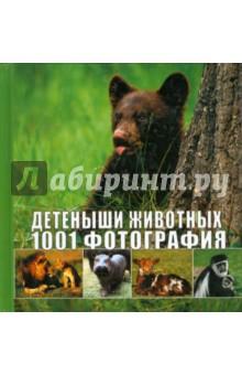 Детеныши животных. 1001 фотография