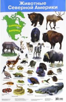 Животные Северной Америки. Демонстрационный плакат (2881)