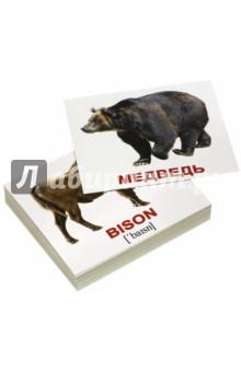 Комплект мини-карточек Wild animals/Дикие животные (40 штук)Английский для детей<br>Дорожный набор из 40 двусторонних карточек с фотографиями диких животных, с подписями на английском языке и транскрипциями. На обороте - те же картинки с подписями на русском языке.<br>Рекомендуется для занятий с детьми в поездках, на прогулке, в машине и т.д.<br>В наборе 40 карточек: 1.Elk - Лось 2.Hare - Заяц 3.Wolf - Волк 4.Tiger - Тигр 5.Puma - Пума 6.Deer - Олень 7.Fox - Лисица 8.Hedgehog - Ёж 9.Beaver - Бобёр 10.Coyote - Койот 11.Jaguar - Ягуар 12.Wild boar - Кабан 13.Giraffe - Жираф 14.Camel - Верблюд 15.Cheetah - Гепард 16.Arctic fox - Песец 17.Panther - Пантера 18.Leopard - Леопард 19.Chipmunk - Бурундук 20.Hippopotamus - Бегемот 21.Lion - Лев 22.Lynx - Рысь 23.Bison - Зубр 24.Mink - Норка 25.Koala - Коала 26.Zebra - Зебра 27.Hyena - Гиена 28.Panda - Панда 29.Raccoon - Енот 30.Walrus - Морж 31.Coypu - Нутрия 32.Bear - Медведь 33.Elephant - Слон 34.Squirrel - Белка 35.Badger - Барсук 36.Rhino - Носорог 37.Marten - Куница 38.Monkey - Обезьяна 39.Kangaroo - Кенгуру 40.Polar bear - Белый медведь.<br>Карточки выполнены на плотном мелованном картоне, изображения цветные.<br>Размер: 9,8х8,3 см.<br>Карточки подходят для обучения детей до 3-х лет, дошкольного возраста, и младшего школьного возраста.<br>