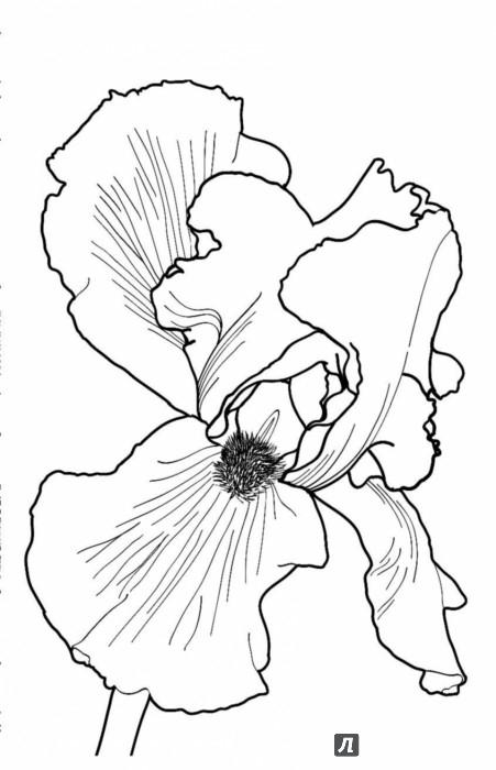 Раскраска антистресс зачарованный сад