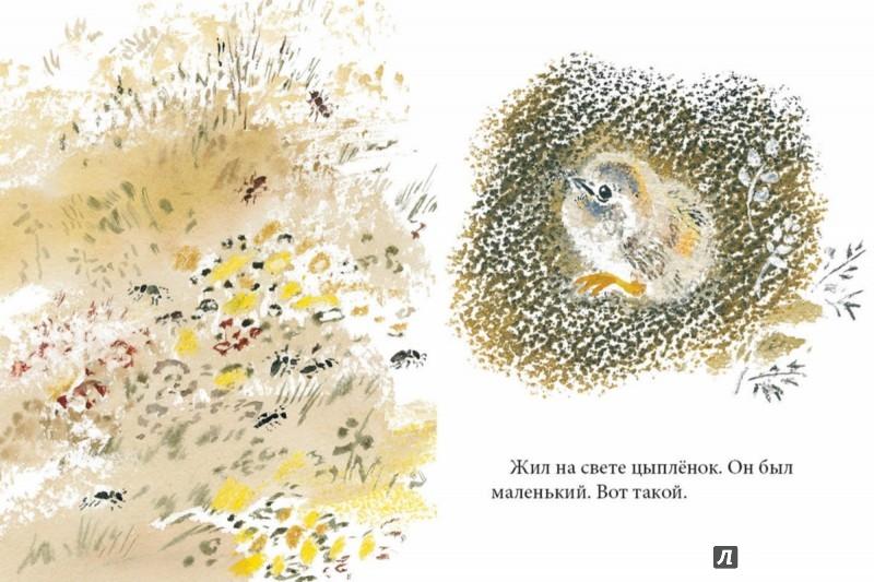 Иллюстрация 1 из 57 для Цыпленок - Корней Чуковский | Лабиринт - книги. Источник: Лабиринт