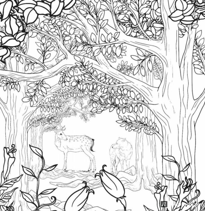 Раскраски заколдованный лес